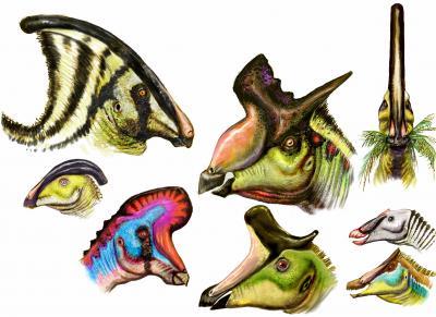 Hadrosaurios sexis
